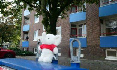 knuffelbeer bij flat in arme wijk in de Veenkoloniën
